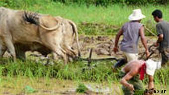 Bauern bei der Arbeit auf einem Reisfeld im Tal von Vinales (Foto: Lena Fabian)