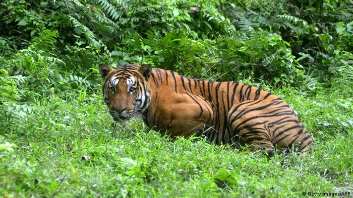 South Asia sees rise in poaching amid COVID-19 lockdowns