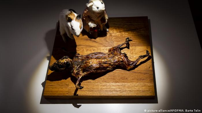 Cuy, or Guinea pig, at the Disgusting Food Museum in Malmo, Sweden (picture-alliance/AP/DFM/A. Barte Telin)