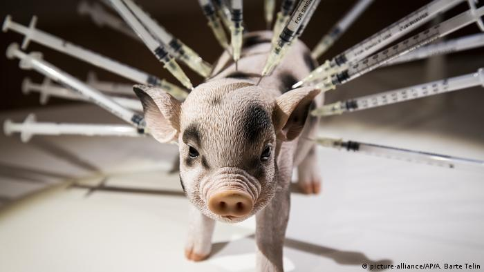 A figurine piglet stuck with needles at the Disgusting Food Museum in Malmo, Sweden (picture-alliance/AP/A. Barte Telin)