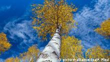 BG Deutschland Herbst in der Heide