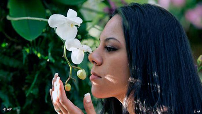 Flash - Galerie Orchideenfächer in Deutschland Nase riecht an Orchidee (AP)