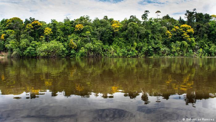 Amazonía colombiana. Alemania, entre otros países europeos, aporta recursos de la cooperación internacional para atajar su deforestación