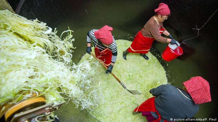 Заготовка квашеной капусты в Люббенау, Шпревальд