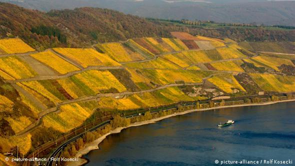 Виноградники в Рейнской долине