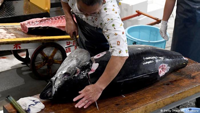 A worker at the fish brokage cuts tuna at the new Toyosu fish market