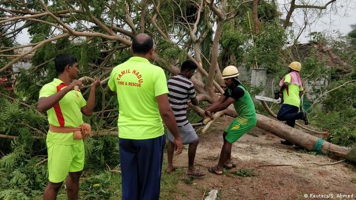 Вітер повалив багато дерев у штаті