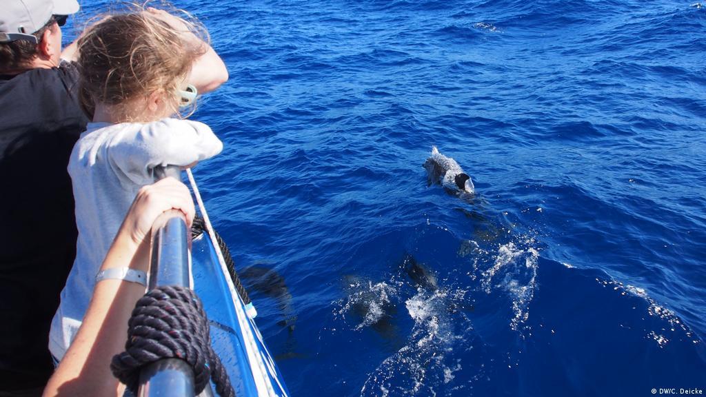 Palmitos park gran canaria delfine schwimmen