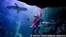 BdT Weihnachtsmann taucht im SeaLife-Becken