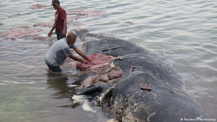 Homens extraem resíduos plásticos de carcaça de cachalote na Indonésia