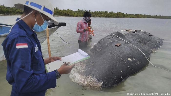 Мертвый кашалот, в желудке у которого обнаружили 6 кг пластика