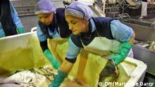 Portugal Fischindustrie Kabeljau