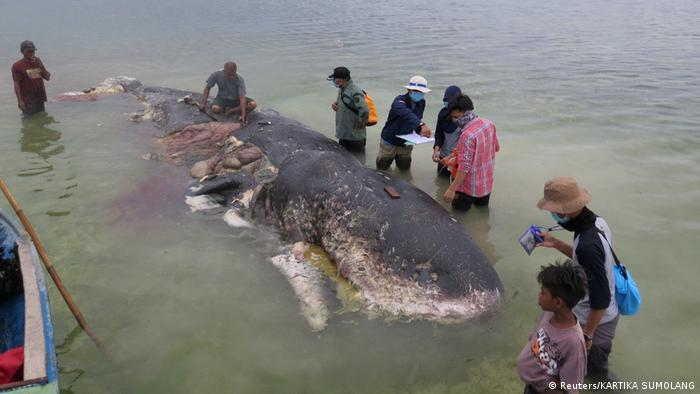 A group of men and woman stand around a whale in shallow water that has plastic in its belly