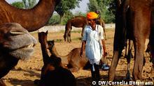 Indien Nomaden mit Kamelen