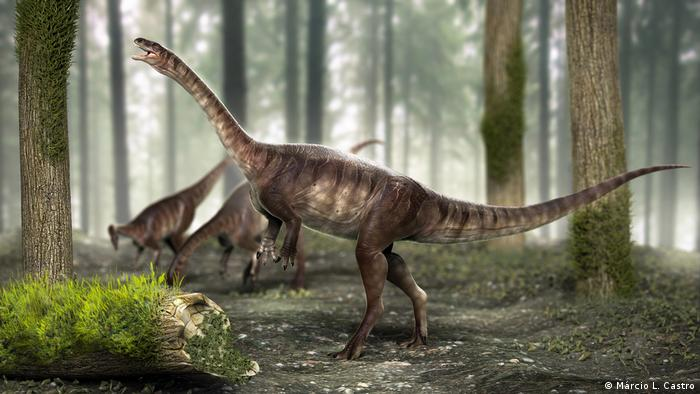 Descoberto no Brasil dinossauro de pescoço longo mais antigo do mundo