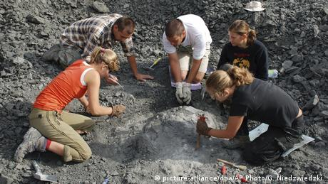 Archaeologists unearth fossils in Poland