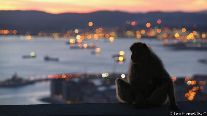 Gibraltar has a population of 30,000 people and a number of monkeys