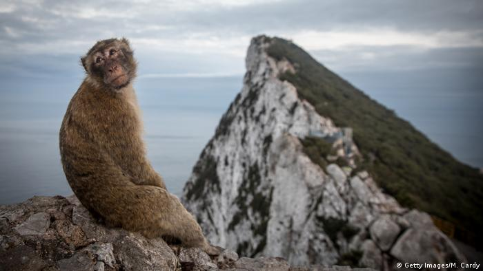 Gibraltar - Affen (Getty Images/M. Cardy)