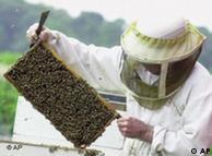 Med može da se vrca i na krovu Vaše zgrade