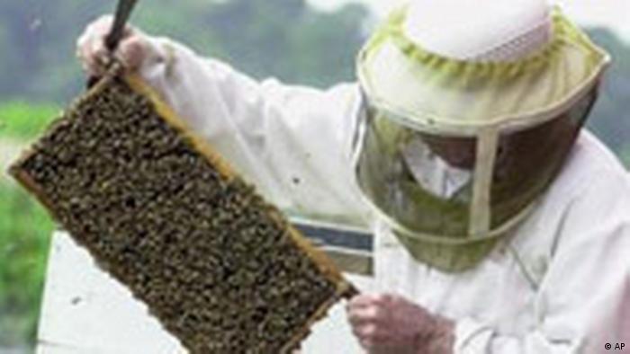 Imker mit Honigbienen