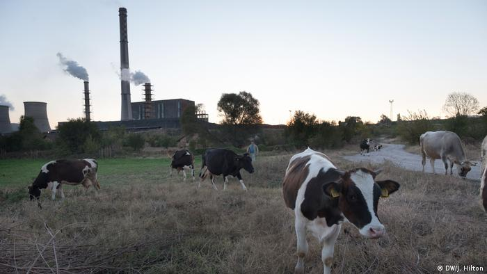 Cows grazing on a field in front an electrical power plant