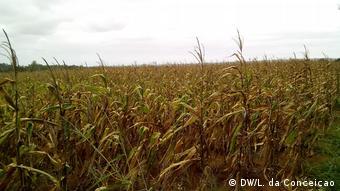 Dürre in Mosambik