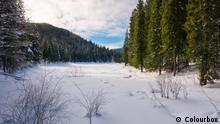 Waldlandschaft im Winter (Colourbox)