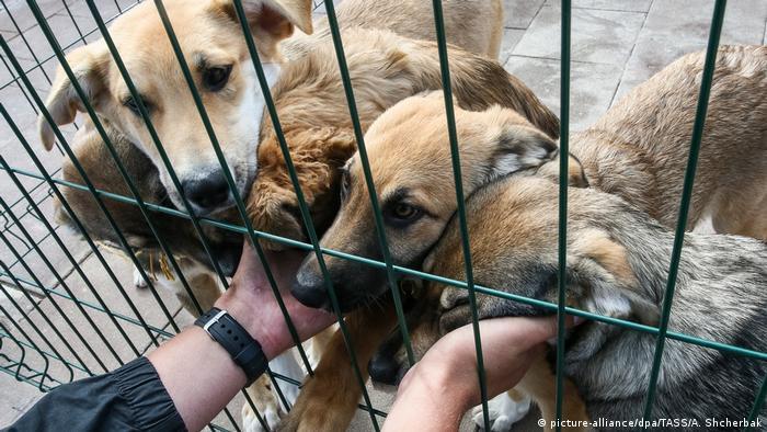 Psi u prihvatilištu za nezbrinute životinje