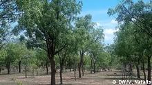 Tansania Waldprojekt in Shinyanga