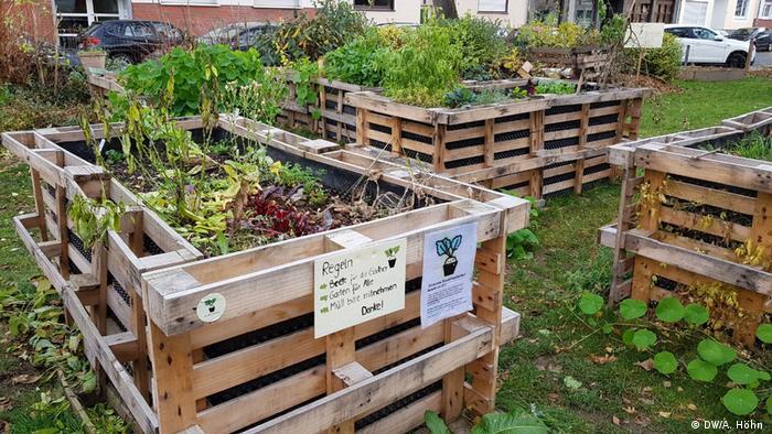 Atemberaubend Urban Gardening: Die Stadt, mein Garten | Wissen & Umwelt | DW #FZ_48