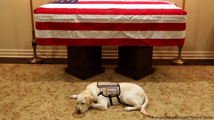 George H. W. Bush's service dog lies in front of his coffin (picture-alliance/dpa/AP Photo/E. Sisley)