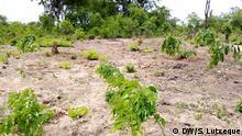 Mosambik Entwaldung in Mecubuti, Nampula