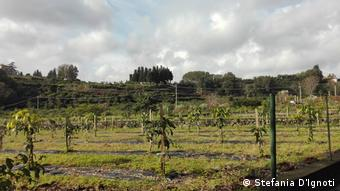 Νέες καλλιέργειες στη Σικελία