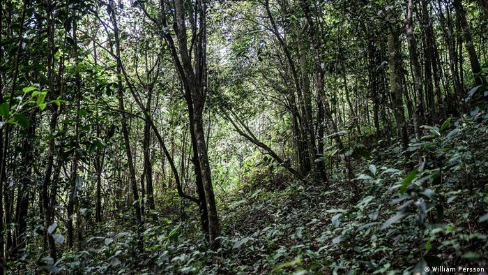 Global Ideas Thailand wilder Tee (Jinpa Smith)