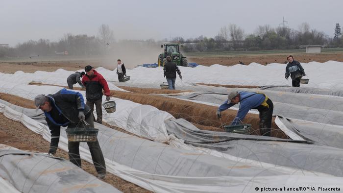 Значна частина заробітчан працює за кордоном на сезонних роботах
