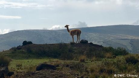 Parece un lindo día para ascender al Chimborazo.