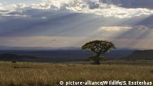 Landschaft Kenia Masai Mara