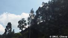 Vegetación en la región del Páramo.