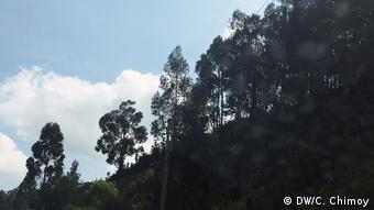 Vegetación en Ecuador.