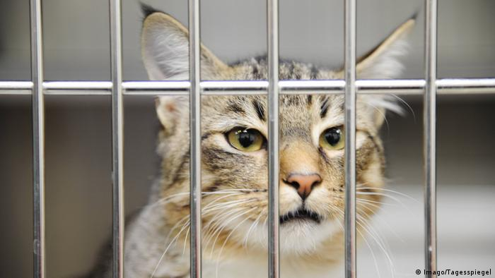 A cat behind metal bars in the Berlin Animal Shelter