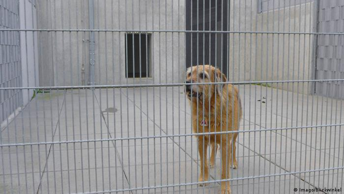 A dog stares out from behind a metal wire fence at an animal shelter in Gittern, Germany