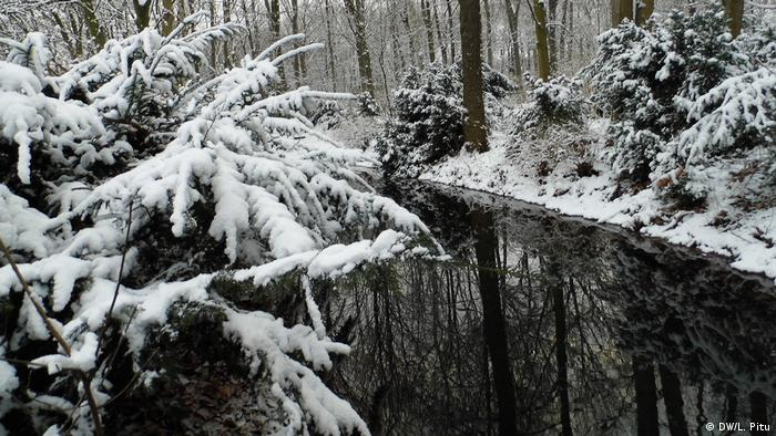 Tiergarten iarna (DW/L. Pitu)