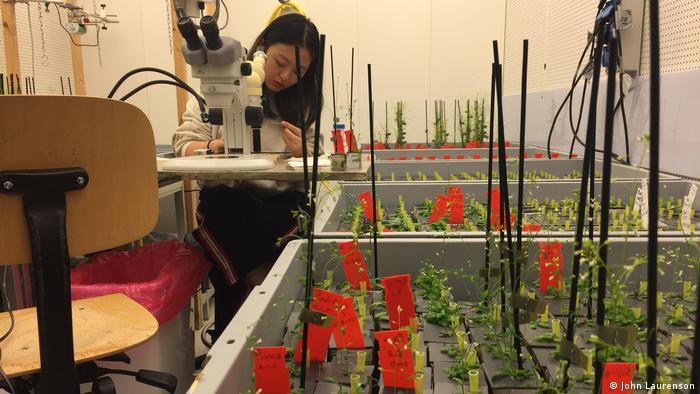 Eine Studentin forscht in einem Labor (WUR)