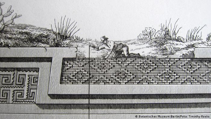Zeichnung Alexander von Humboldt beim Vermessen der Ruinen des Palastes von Mitla in der mexikanischen Provinz Oaxaca