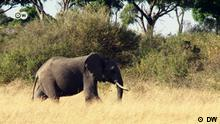 eco@africa Elefant in Kenia