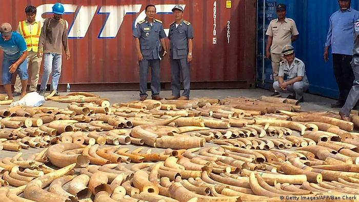 Cambodian authorities seize ivory coming from southern Africa (Getty Images/AFP/Ban Chork)