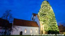 12.12.2018, Baden-Württemberg, Bronnweiler: Ein als Weihnachtsbaum geschmückter Mammutbaum steht neben der evangelischen Kirche. (zu dpa: «Mammut-Weihnachtsbaum» vom 15.12.2018) Foto: Sebastian Gollnow/dpa +++ dpa-Bildfunk +++   Verwendung weltweit