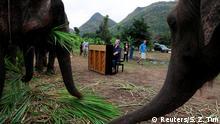British volunteer Paul Barton plays piano for sick, abused, retired and rescued elephants in sanctuary along Thailand-Myanmar border in Kanchanaburi, Thailand, December 9, 2018. Paul has been playing piano for elephants as a volunteer for almost ten years. REUTERS/Soe Zeya Tun