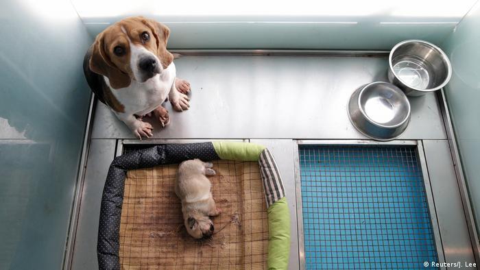 Sinogene China Hunde Klon (Reuters/J. Lee)