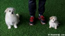 Sinogene China Hunde Klon